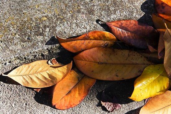 Leaves On the Road  by heatherfriedman