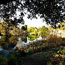 On Golden Pond ~ Dulwich 1st April 2012 by MarcW