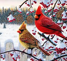 cardinals birds winter cardinals by Adam Asar