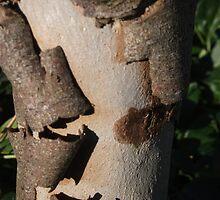 bark strip by steveferr