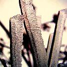 snowing leaves by nikolasafen