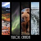 Yukon Canada by Marty Samis