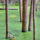 Beaver Flooded Forest by Steven Olmstead