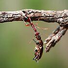 Hang Tough by CBoyle