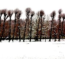 Winter Tree Line by Xoanxo