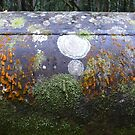 Seasonal Takeover: Bahena Gorge, Gordonvale, Queensland, Australia by linfranca