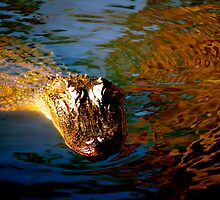 Alligator in the Louisiana swamp by ADayToRemember