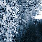 Frosty Path by Vicki Spindler (VHS Photography)