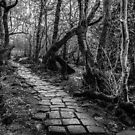 Paved Along the Riverbank by John Dunbar