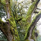 Mossy Tree by Nina Hofstadler