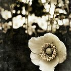 anemone by inourgardentoo