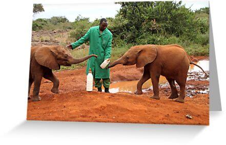"""Just Wait Your Turn"", Baby Elephants, Kenya by Carole-Anne"