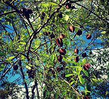 Fresh Tree Leafs by tropicalsamuelv