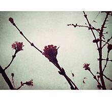 Winter Blossom I Photographic Print