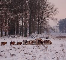 Wintergathering by liesbeth