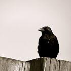 Raven by Jack Taylor