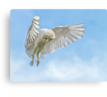 Barn Owl Hunting Hover Canvas Print