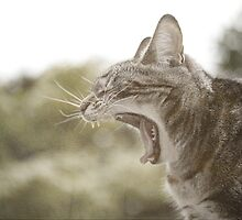 Cat Yawn by Mike Taylor