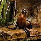 Sea Lion  by IyoungImages