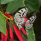 Pair of Butterflies in OKinawa by Heather Conley