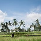 The Banyuwangi country side by neneaniket