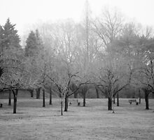 Foggy Day. B&W photo of naked winter trees. by W. Lotus