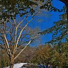 USA. New York. Central Park. The First Snow. by vadim19