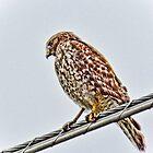 Big Bird by McGaffus