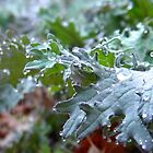 Dew-Sweetened Kale by jessicacbarker