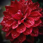 blood red.... soaked with raindrops by jammingene