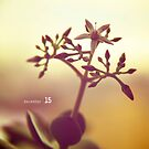 December 15 by evStyle