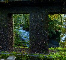 Rain Forest Bridges by Elaine Bawden