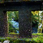 Barn&#x27;s Creek Bridge in Olympic Rainforest by Elaine Bawden