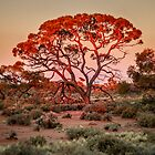 Red Mulga Tree by eSWAGMAN