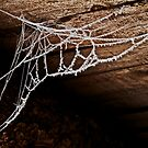 Cold Web by Odd-Jeppesen