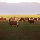 Cows at Dusk by eSWAGMAN