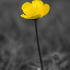 Buttercup by mps2000
