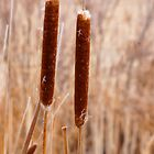 A Couple of Cattails by Karen Jayne Yousse