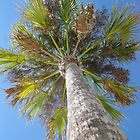 Palm Tree by sunsetrainbow