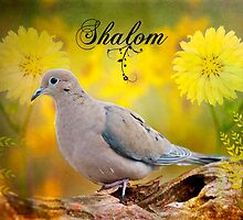 Shalom by Bonnie T.  Barry