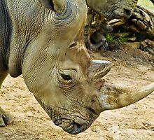 Rhino by Thad Zajdowicz