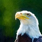 Beautiful Bald Eagle 2 by Adam Asar
