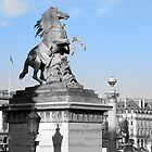 Marly Horse - Place De La Concorde, Paris, France by Neroli Henderson