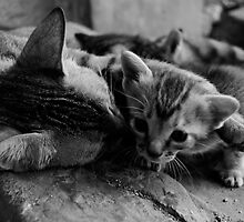 Mother Cat Embraces her Kitten by freemilo