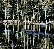 Nature`s Rib Cage i-Pad Case by ipadjohn