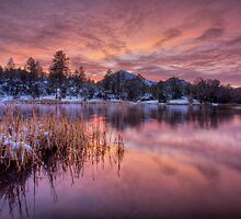 Cold Dusk by Bob Larson
