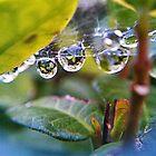 Spider-web  by Jared Lindsay