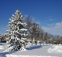 After the Snow 2 by Graham Taylor