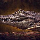 Nile crocodile by AngiNelson
