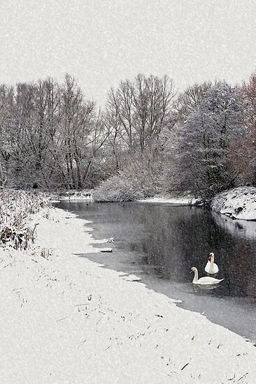 Swans in the snow by Gary Eason + Flight Artworks